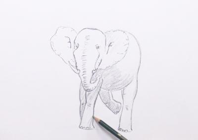 Les p'tits croquis : Episode 32 – L'éléphant