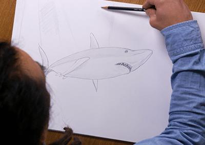 Les p'tits croquis : Episode 59 – Le Requin